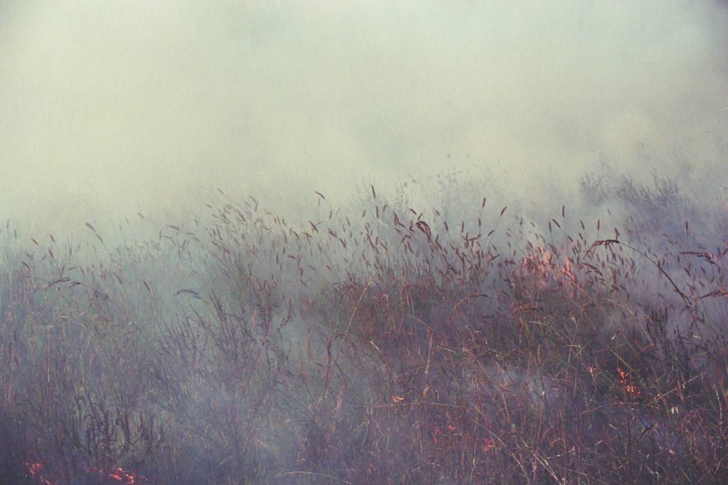 "Mila Panic,""Burned Field"", 2017"
